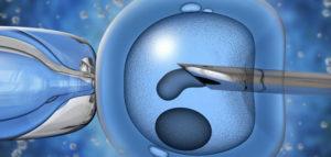 Донорство яйцеклеток